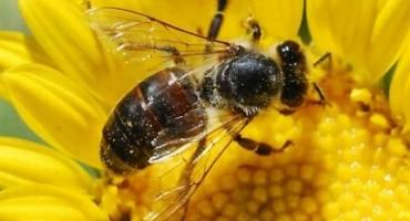 ZAGREBAČKI LIJEČNICI U ŠOKU: Neizlječivi rak potpuno je izliječio pomoću - meda!