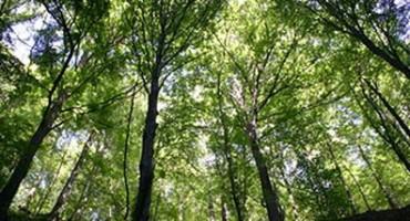 Imenovana nova Uprava Hercegbosanskih šuma