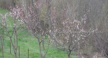 Hercegovači poljoprivrednici u strahu: Samo da mraza ne bude