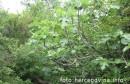 Crnopod kod Ljubuškog