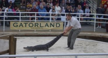 Pijani turist zajahao krokodila i čudom preživio