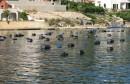 Foto priča: Plavi se Jadran talasa