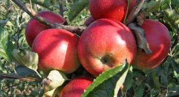 Poljoprivrednici iz Hercegovine zajedno mogu više: Uvezati proizvođače voća i povrća
