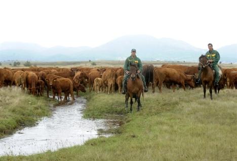 Zabranjena ispaša stoke kod Tomislavgrada zbog otrova