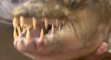 Ulovio ribu koja proždire krokodile