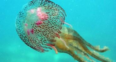 Invazija džinovskih meduza na Japan