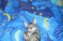 Mjesta gdje sve mačka može zaspati