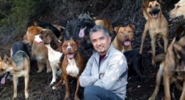 Šaptač psima: Cesar Millan dolazi u Sarajevo
