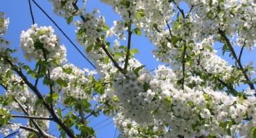AccuWeather pogriješio, proljeće će biti toplo i s manje padalina