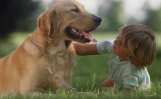 Napravite prirodni sprej protiv buha i krpelja za svojeg psa