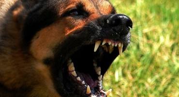 Dječak u divljačkom napadu psa zaradio 200 šavova
