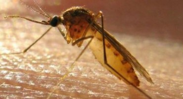 Čuvajte se mačjeg izmeta, komaraca s Jadrana i vlastitih prljavih ruku!