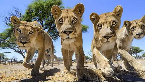 Kako fotografirati ''kralja'' životinja izbliza