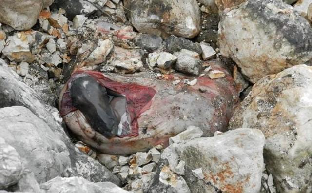 Zastrašujući prizor na Čabulji: Ubili kobilu i odnijeli 'korisne' dijelove