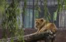 Zoološki vrt u Osijeku