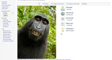 Kome pripada ovaj selfie? Fotografu ili majmunu?