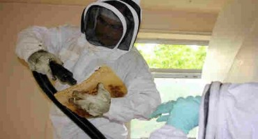 Zbog prskanja voća počele ugibati pčele