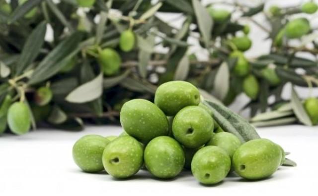 U Hercegovini se proizvode vrhunska maslinova ulja