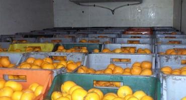 Grude: Spriječen šverc mandarina i duhana