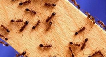 11 genijalnih trikova kako se riješiti mrava jednom zauvijek