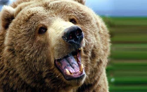 Medvjed sišao do obiteljskih kuća i uništio pčelinje košnice