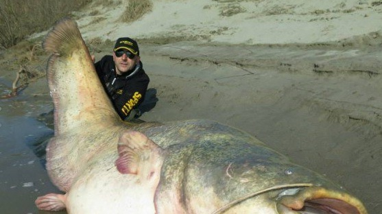 Pogledajte kakvo čudovište od soma je uhvatio ovaj ribič