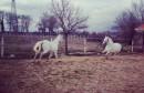 Konjanici povezuju Hercegovačke župe sa svetištem u Međugorju