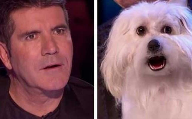 Pas i njegov vlasnik šokirali svijet