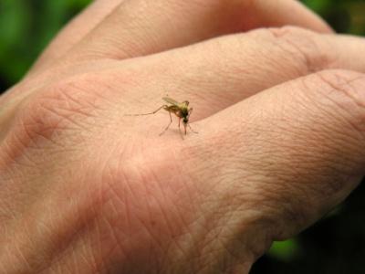 Znanstvenici tvrde kako komarci pamte kad ih pokušamo otjerati