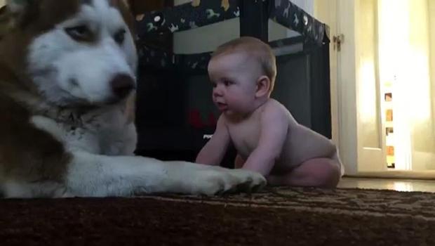 Haski je pokušao ostati nezainteresiran, ali ga je beba brzo raznježila