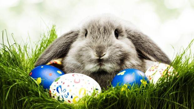 Ovako je zec postao jedan od simbola Uskrsa