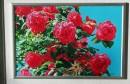 Marin Topić: Ruže babe Zore