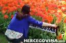 HŠK Zrinjski: Potpora Plemićima iz Nizozemske