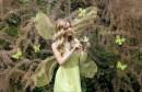 Misice kao šumske vile; koja ima ljepša krila?