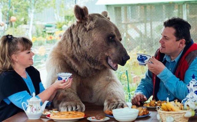 Par živi sa medvjedom teškim 140 kilograma