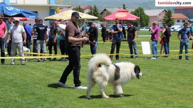 Ban Sokol najljepši pas državne izložbe pasa u Tomislavgradu