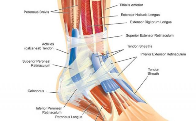 Povrede skočnog zgloba