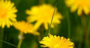Ova biljka bi mogla pomoći u liječenju raka