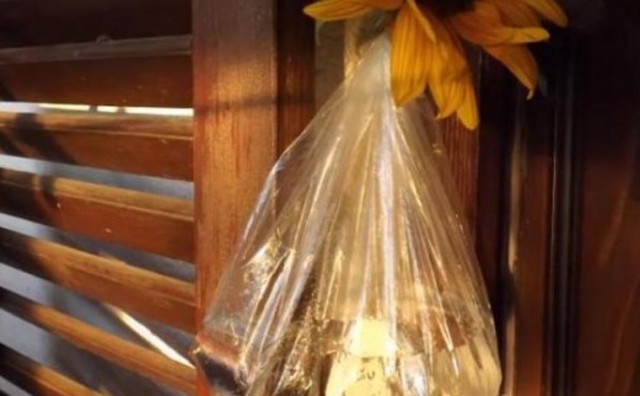 Pogledajte kako se riješiti dosadnih muha u kući