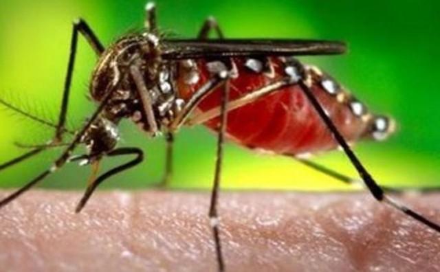 Riješite se komaraca oko vas ovim genijalnim trikom