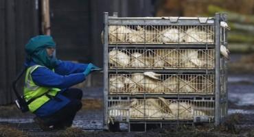 Ptičja gripa sve bliža Bosni i Hercegovini