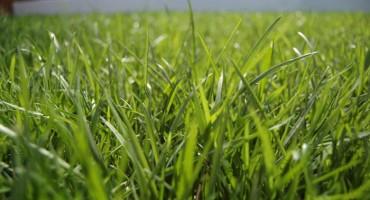 Američki naučnici slušaju kako raste trava