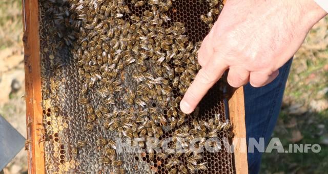 Ovo su simptomi trovanja pčela