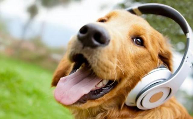 Koju glazbu psi vole najviše da slušaju?