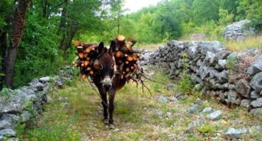Demir Mahmutćehajić kupio 39 duluma zemlje u Stocu, planira farmu magaraca