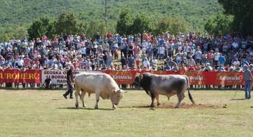 24. Seoska olimpijada i borba bikova – RADOŠIĆ 2017.