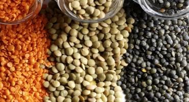 Zaboravljeni izvor proteina: Leća