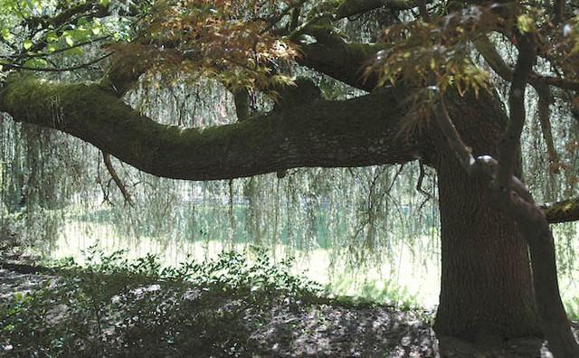 Ako primijetite iskrivljeno drvo dok šetate kroz šumu, odmah počnite gledati oko sebe