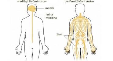 Polineuropatija je poremećaj koji je rezultat oštećenja perifernih živaca
