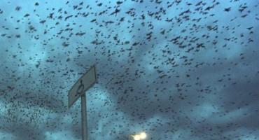 Horor u susjedstvu: Vrane napadaju djecu!